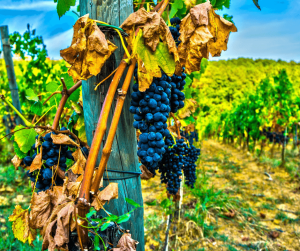 Wine Route in Rhineland Palatinate